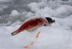 matanza-de-foques